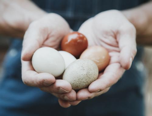 Seasonal Feature: Eggs